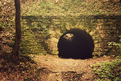 Tunnel forest Stock Photography