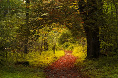 Tunnel in a forest during autumn Royalty Free Stock Photos