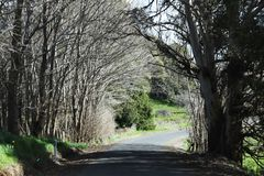 Tunnel formed by row of trees on either side. Natural tunnel formed by rows of trees on either side Royalty Free Stock Photos