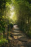 A tunnel of green bamboo branches with soft light at the end. Passage in the park with steps from stone slabs. The sun`s rays mak. E their way through the bamboo Royalty Free Stock Images