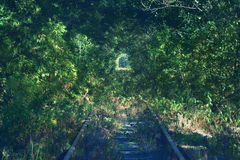 Tunnel of green plants, stretching into the distance rails. Royalty Free Stock Image