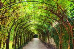 Tunnel of green plants. In the park in Salzburg, Austria Stock Photos