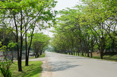 Tunnel green trees on either side of the road. In Thailand Stock Photography