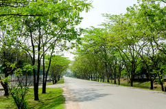 Tunnel green trees on either side of the road Royalty Free Stock Images