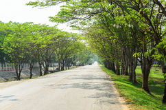 Tunnel green trees on either side of the road Stock Images