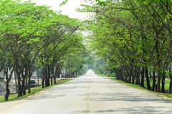 Tunnel green trees on either side of the road Royalty Free Stock Photo