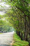 Tunnel green trees on either side of the road Royalty Free Stock Photos