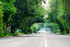 Tunnel of green trees over empty road Stock Photos