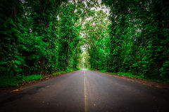 Tunnel of Green Royalty Free Stock Photos