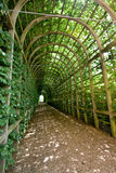 Tunnel of green vines Royalty Free Stock Image