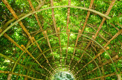 A tunnel of greenery in Potsdam Royalty Free Stock Photo