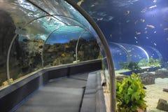 Tunnel in het aquarium Royalty-vrije Stock Afbeelding
