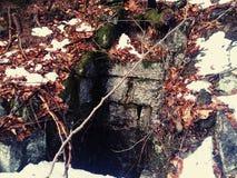Tunnel im Wald stockbild