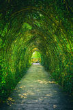 Tunnel from ivy. Ivy covered rack becomes a beautiful tunnel Stock Photo