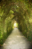 Tunnel from ivy Royalty Free Stock Photo