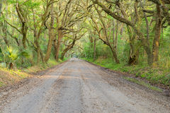 Tunnel of Live Oaks and Spanish Moss in the Deep South Royalty Free Stock Photos