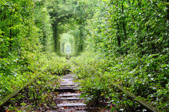 Tunnel of love. Natural tunnel of love formed by trees in Ukraine Stock Photo