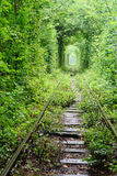 Tunnel of love. Natural tunnel of love formed by trees in Ukraine Royalty Free Stock Image