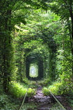 Tunnel of love. Natural tunnel of love formed by trees in Ukraine Royalty Free Stock Photos