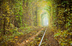 Tunnel of love. Natural tunnel of love formed by trees in Ukraine, Klevan Stock Photos