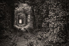 Tunnel of love. Natural tunnel of love formed by trees in Ukraine Royalty Free Stock Photography