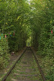 Tunnel of love. Autumn. (Klevan, Rivnenska obl., Ukraine) Stock Photography