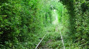 Tunnel of love in Eastern Europe. Railway and forest Stock Images