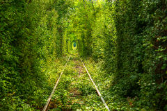 Tunnel of love. Green tunnel thru wild vegetation with train raily Royalty Free Stock Image