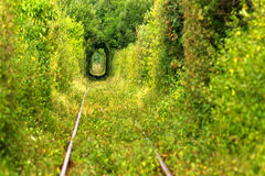 Tunnel of love. Green tunnel thru wild vegetation with train raily Stock Photo