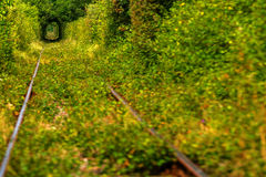 Tunnel of love. Green tunnel thru wild vegetation with train raily Royalty Free Stock Photos