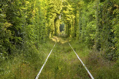 Tunnel of love. Picture of natural tunel formed by trees Royalty Free Stock Photos