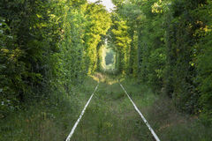 Tunnel of love. Picture of natural tunel formed by trees Royalty Free Stock Image