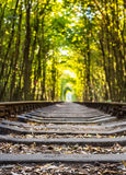 Tunnel of love - railroad tunnel surrounded by. Green trees, created by trees and passing train Royalty Free Stock Photography