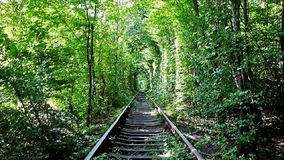 Video of Tunel of Lov in Ukraine. The Tunnel of Love is romantic location in deep forest, here the railroad runs through the thickets, creating the long arched stock video