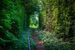 Tunnel in love is Ukraine Royalty Free Stock Images