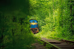 Tunnel of love in ukraine. & Summer Royalty Free Stock Image