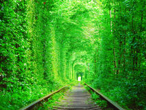 Tunnel of lovers, Ukraine. Royalty Free Stock Images