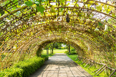 Tunnel made from calabash plant Royalty Free Stock Images