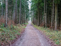 Tunnel made out of trees in the forest. A road going through a forest in Switzerland Royalty Free Stock Image