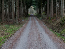 Tunnel made out of trees in the forest. A road going through a forest in Switzerland Royalty Free Stock Images