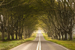 Tunnel made from trees growing above the road Royalty Free Stock Image