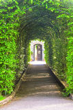 Tunnel made from trees Royalty Free Stock Photography