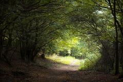 Tunnel magique dans la forêt Photographie stock