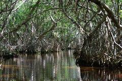 Tunnel in mangroven stock fotografie