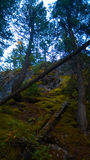 Tunnel mountain banff side trail. Cliff side tunnel  mountain Banff forest tree over looking the   banff sunrise filtered mountains river streams hike climb Royalty Free Stock Photography