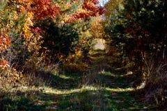 Tunnel mystique des branches dans la forêt d'automne Photographie stock