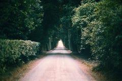 Tunnel naturel constitué par des arbres Image libre de droits