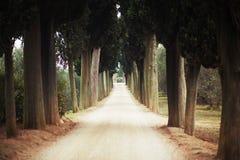 Tunnel naturel constitué par des arbres Photos libres de droits