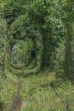 Tunnel naturel de l'amour constitué par des arbres Photos libres de droits
