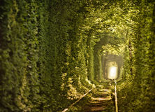 Tunnel naturel de l'amour constitué par des arbres Photos libres de droits